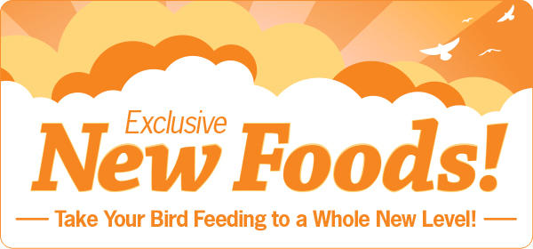 Exclusive New Foods! Take Your Bird Feeding to a Whole New Level!
